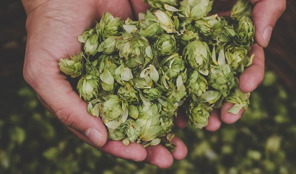 Gruit beer