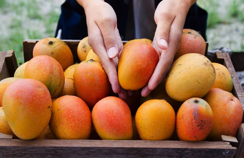 Fruit harvest: When is the right time?